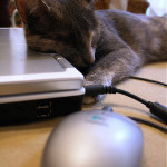 I'd rather take a catnap on the laptop than type on it! photo credit: jypsygen via photopin cc