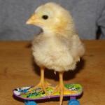Chick on a skateboard