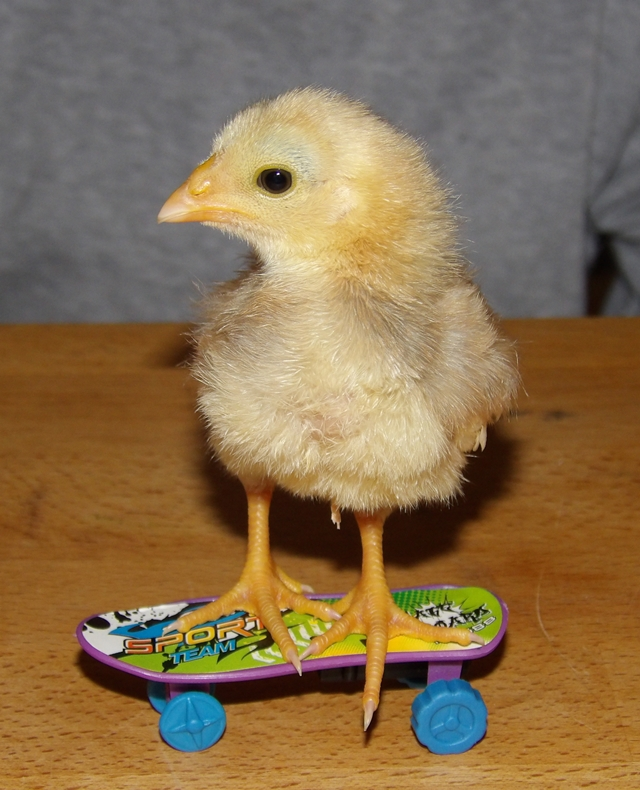 Chick on a skateboard